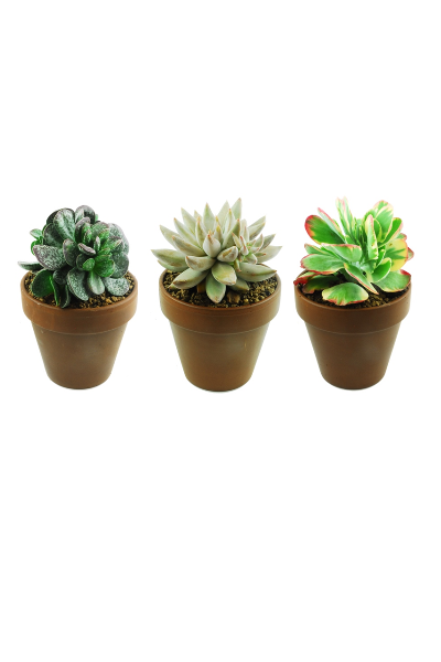 MIX SUCCULENTS -  POT Ø17  TERRACOTTA (baked clay) | Giromagi