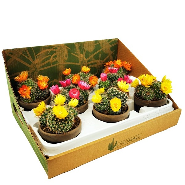 CERAMIC VASE - DRIED FLOWERS - ASSORTED PLANTS VASE Ø 9 - 8 pcs - CARDBOARD DISPLAY | Giromagi